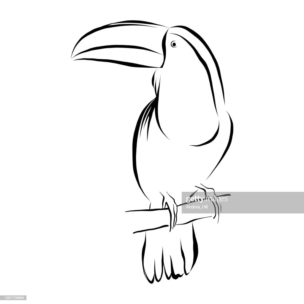 Toucan Vector Illustration in Pen and Ink Isolated on White