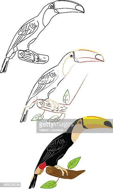 toucans illustration - costa rica stock illustrations, clip art, cartoons, & icons