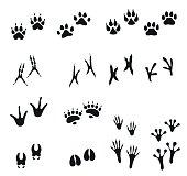 Tracks of wild animals and birds. Paw print.