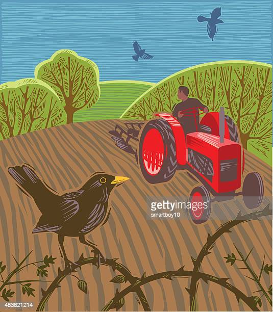 Tractor ploughing field with blackbirds
