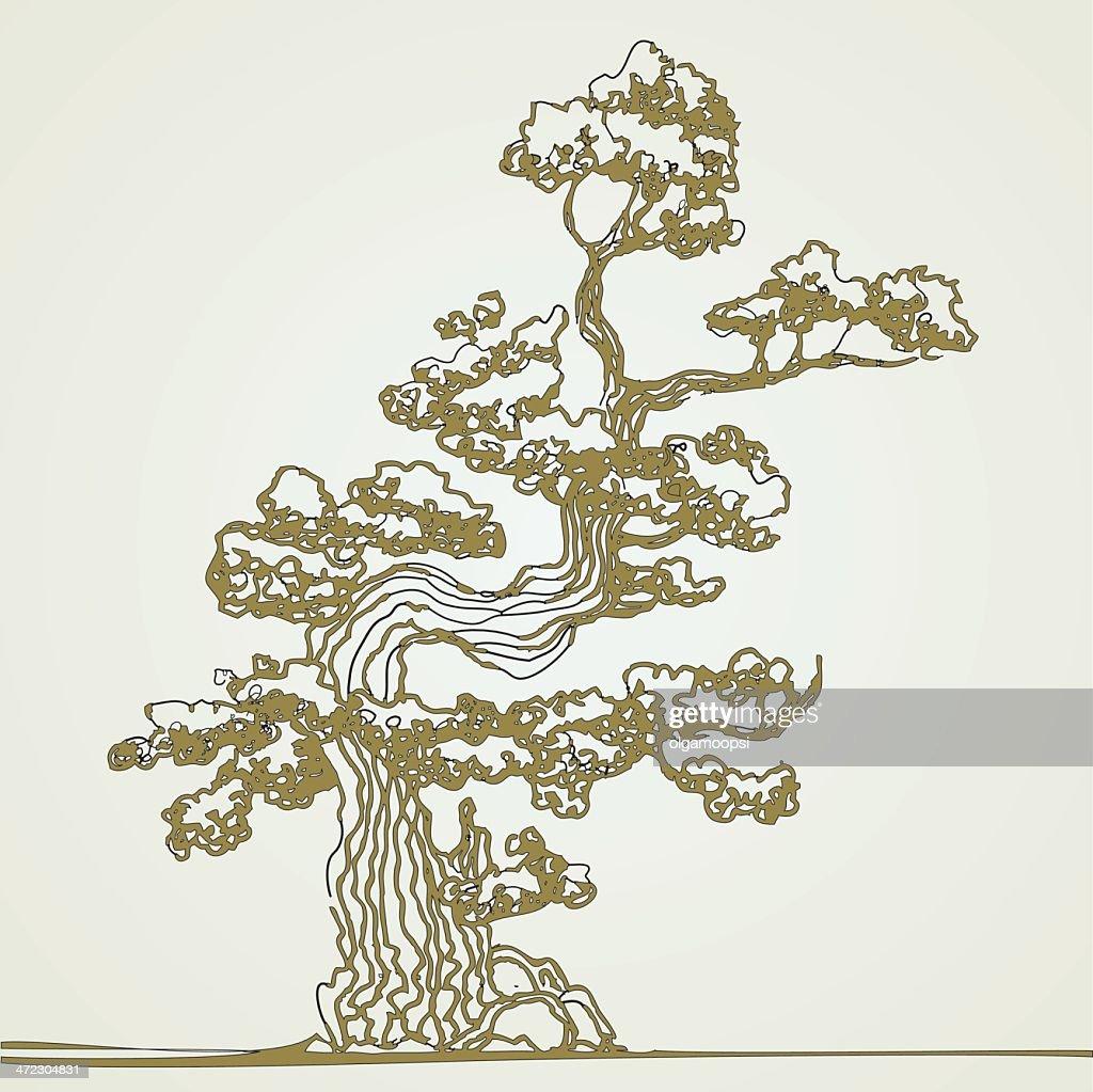 Traditional bonsai tree.