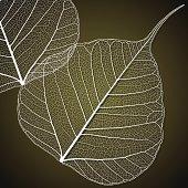 Transparent Linden Leaf