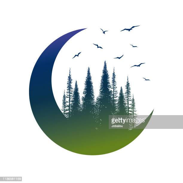 travel badge with pine trees birds and moon - cedar tree stock illustrations, clip art, cartoons, & icons
