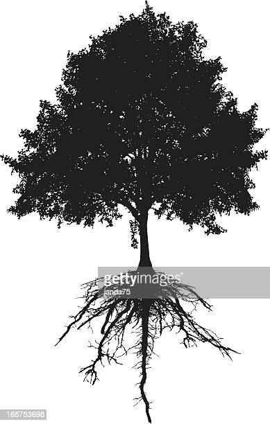 tree and roots - root stock illustrations, clip art, cartoons, & icons