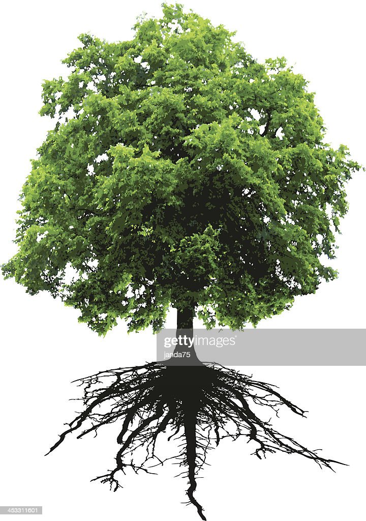Tree and roots : stock illustration