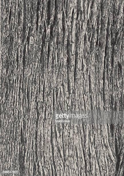 tree bark - tree bark stock illustrations, clip art, cartoons, & icons