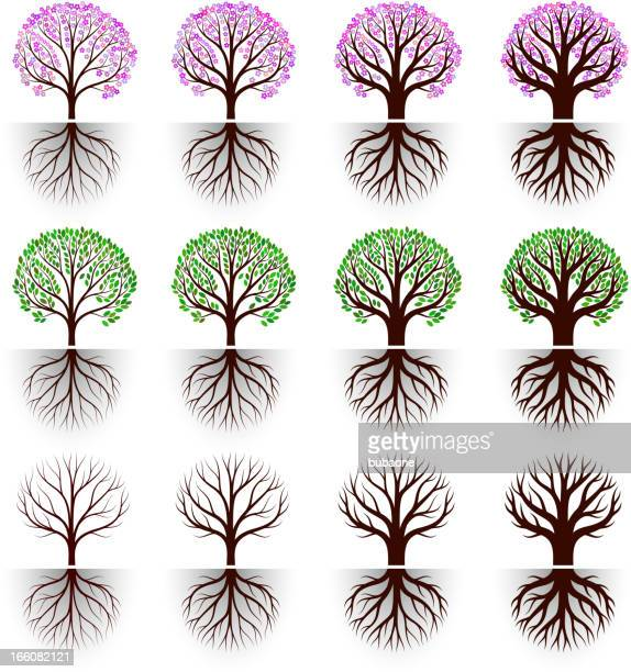 tree blossom with flowers and leaves vector icon set - deciduous tree stock illustrations, clip art, cartoons, & icons