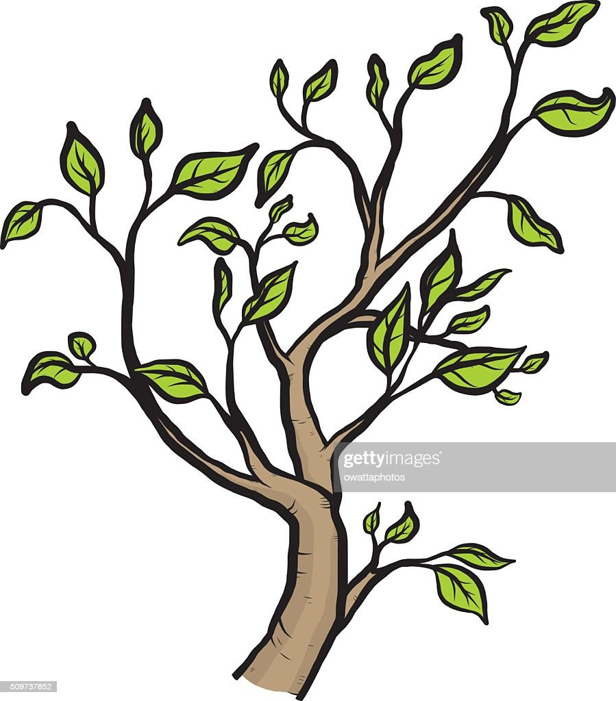 tree, branch and leaves