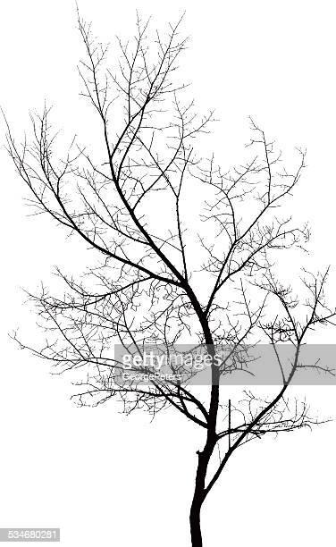 Tree Branch Design Element