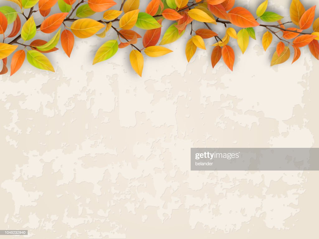 Tree branch on old plastered wall background.