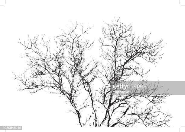 illustrations, cliparts, dessins animés et icônes de arbre branches fond - arbre sans feuillage