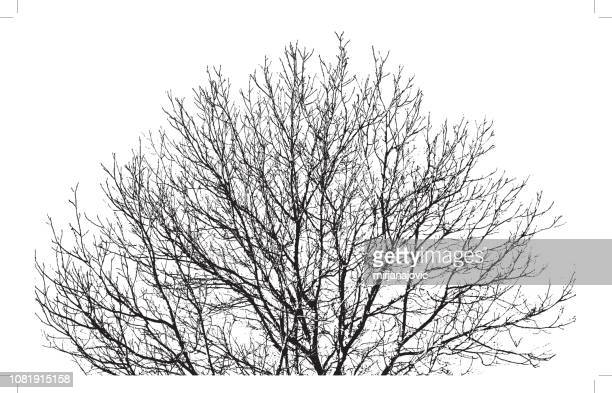 tree branches background - pen and ink stock illustrations