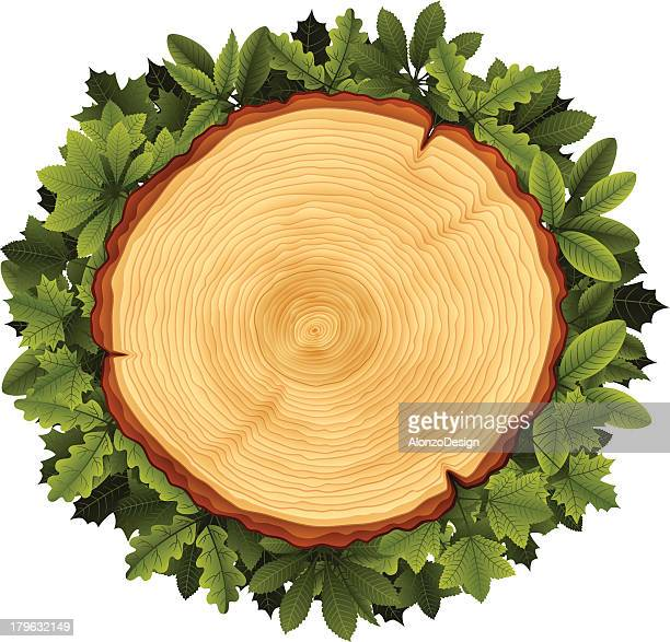 tree cross section and leaves wreath - aging process stock illustrations