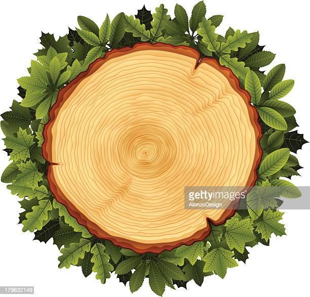 ilustrações, clipart, desenhos animados e ícones de árvore seção transversal e folhas coroa de flores - armação de madeira