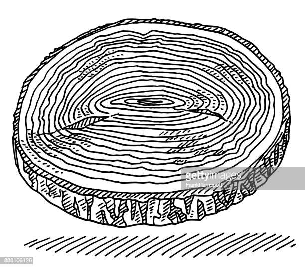 tree disc annual rings drawing - tree rings stock illustrations, clip art, cartoons, & icons