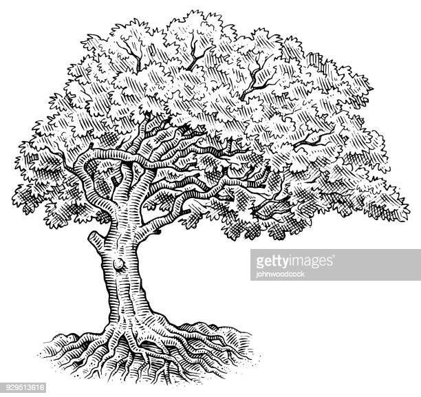 tree drawing illustration - pen and ink stock illustrations