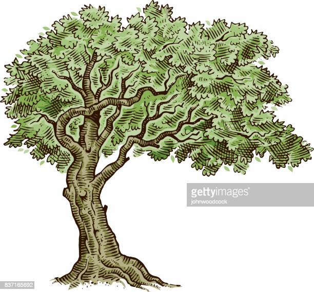 tree drawing vector illustration - tree roots stock illustrations, clip art, cartoons, & icons
