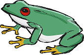 tree frog, illustration of wildlife, zoo, wildlife, animal of ra