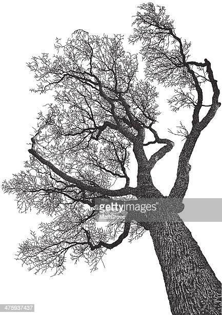 tree from below - tree bark stock illustrations, clip art, cartoons, & icons