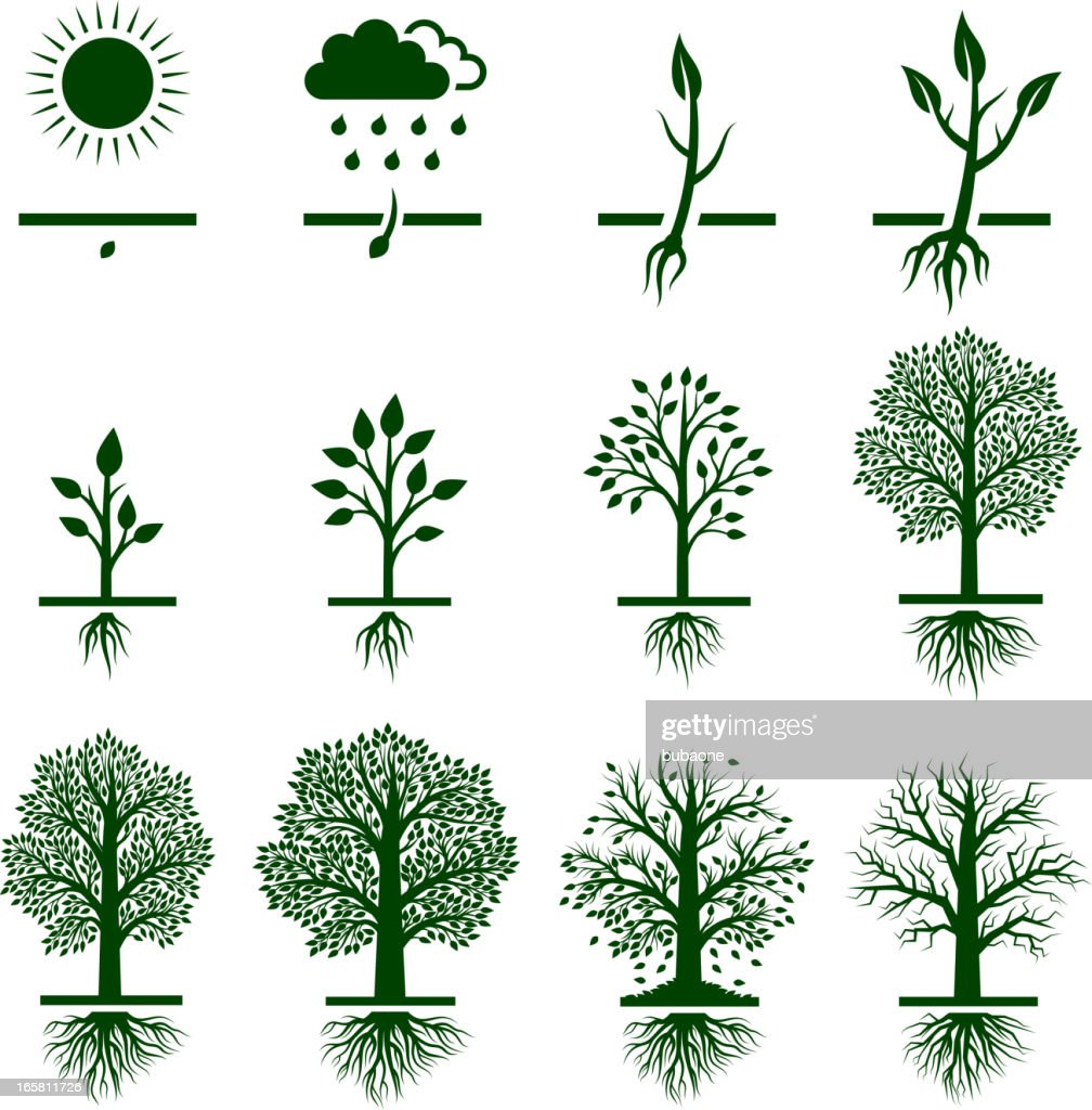 Tree Growing growth life cycle royalty free vector icon set : stock illustration