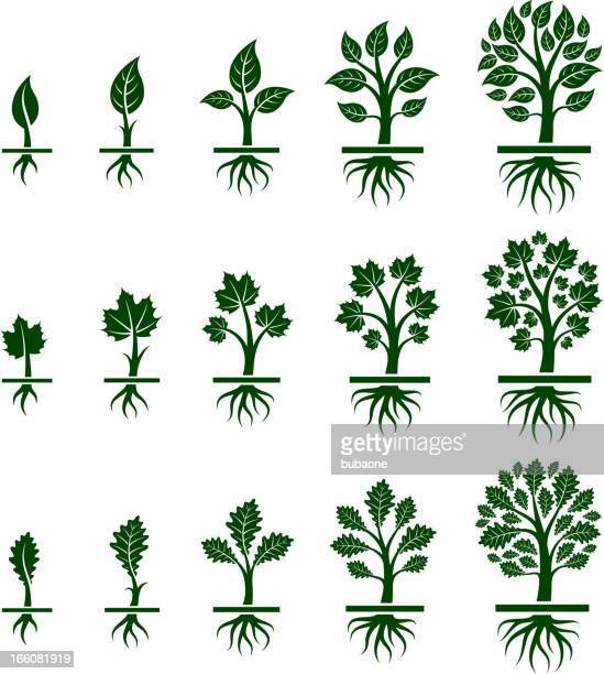 tree growing maple, oak and birch in nature - root stock illustrations, clip art, cartoons, & icons