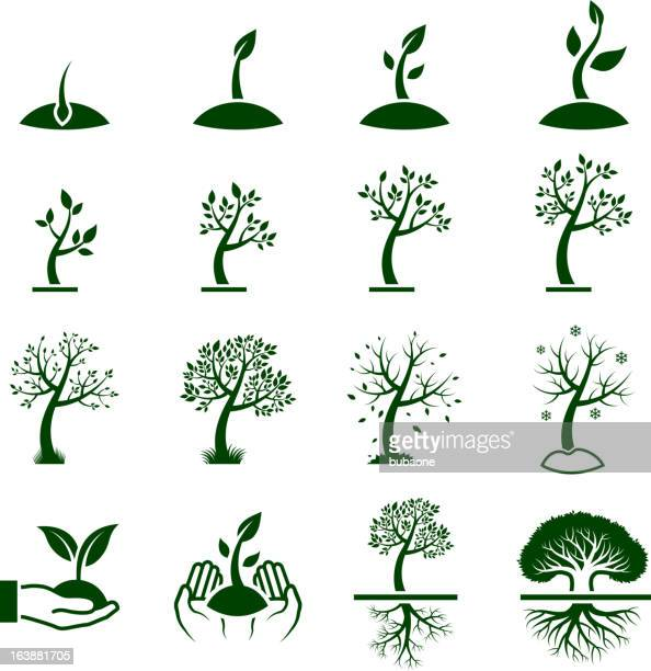 Tree Growing Process green royalty free vector icon set