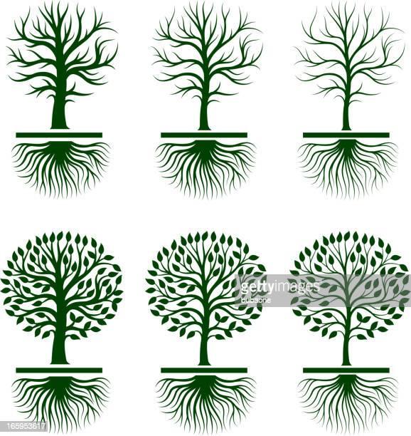木の成長、ロイヤリティフリーのベクトルアイコンを設定します。 - オリーブの木点のイラスト素材/クリップアート素材/マンガ素材/アイコン素材