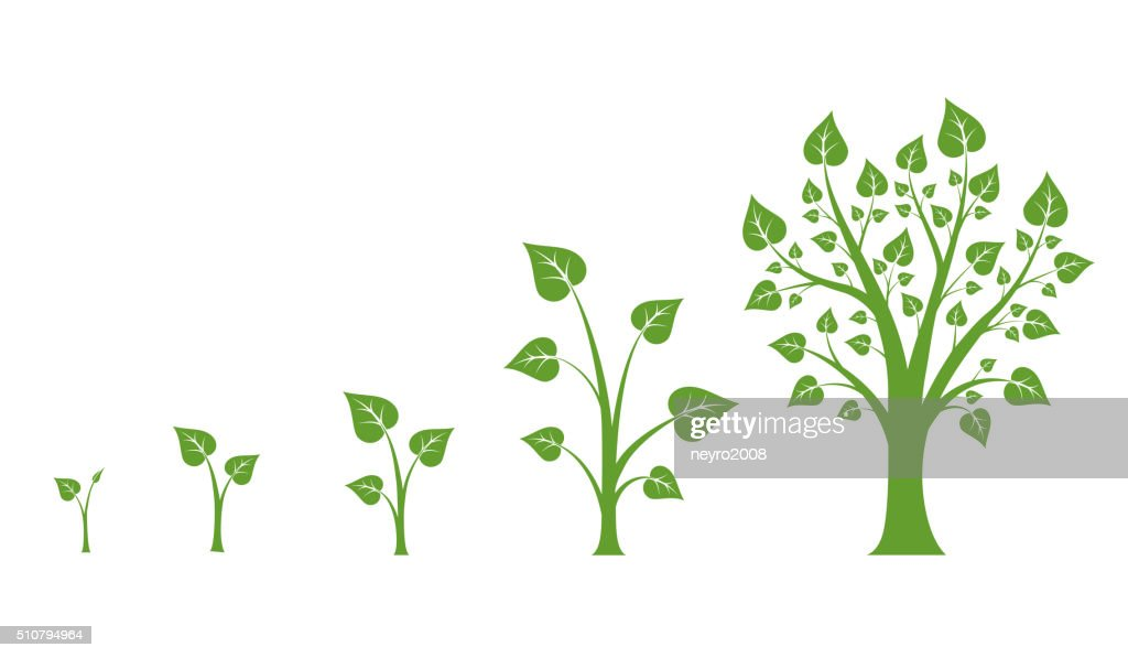 Tree growth vector diagram