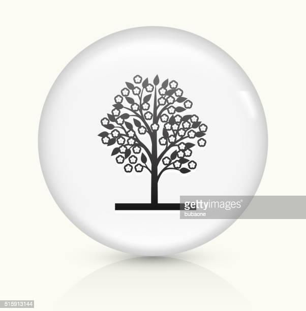 ilustraciones, imágenes clip art, dibujos animados e iconos de stock de árbol icono sobre blanco, vector de redondo botón - cherry tree