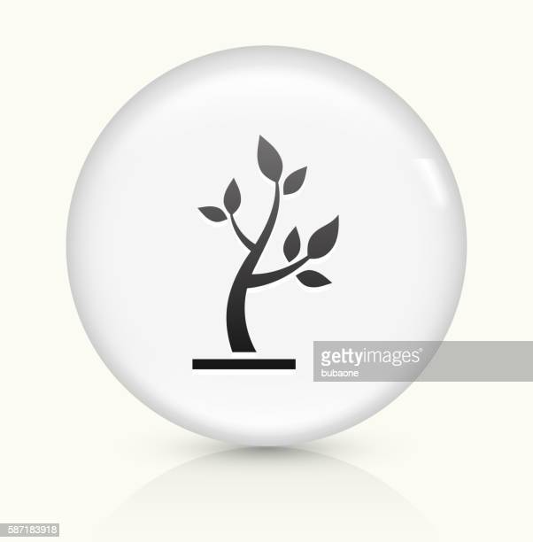 tree icon on white round vector button - tree trunk stock illustrations, clip art, cartoons, & icons