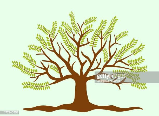 ilustraciones, imágenes clip art, dibujos animados e iconos de stock de icono del árbol - family tree