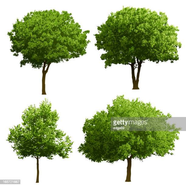 tree illustrations - tree stock illustrations, clip art, cartoons, & icons