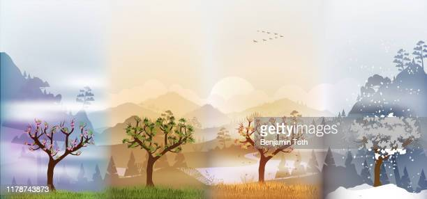 tree in four seasons background - season stock illustrations