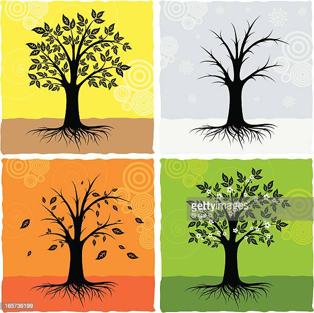 ilustraciones, imágenes clip art, dibujos animados e iconos de stock de árbol en cuatro estaciones - las cuatro estaciones