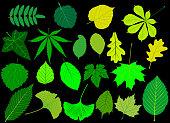 tree leaves green set,