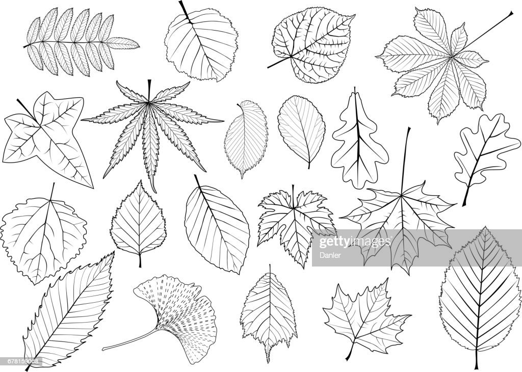 tree leaves set,