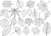 tree leaves set,