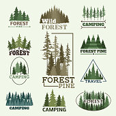 Tree outdoor travel green silhouette forest badge coniferous natural badge tops pine spruce vector