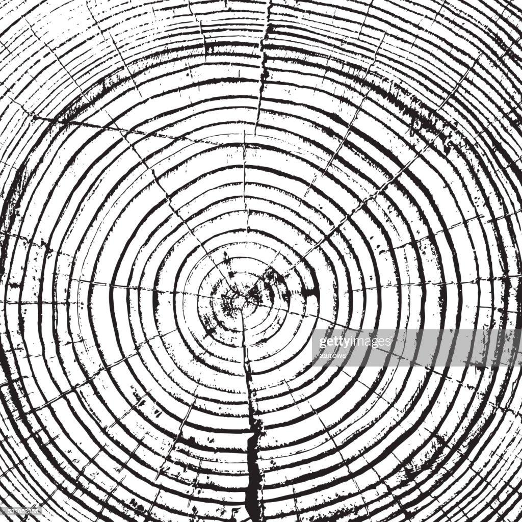 Tree rings saw cut tree trunk
