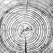 Tree rings saw cut tree trunk