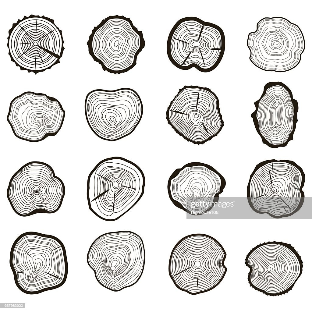 Tree Rings Set Saw Cut Trunk. Vector