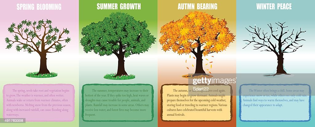 Tree season color info graphics concept vector design - illustrator