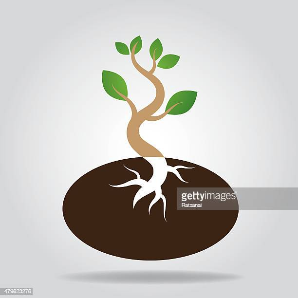 tree seeds icon vector - plant stage stock illustrations, clip art, cartoons, & icons
