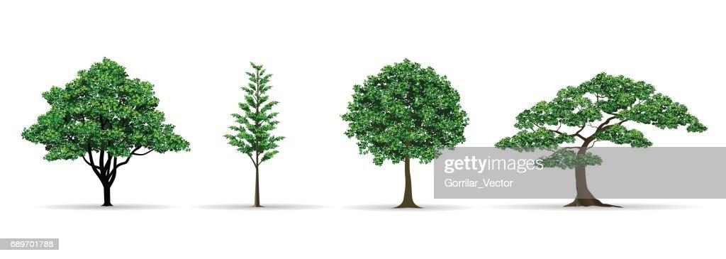 tree set realistic vector illustration