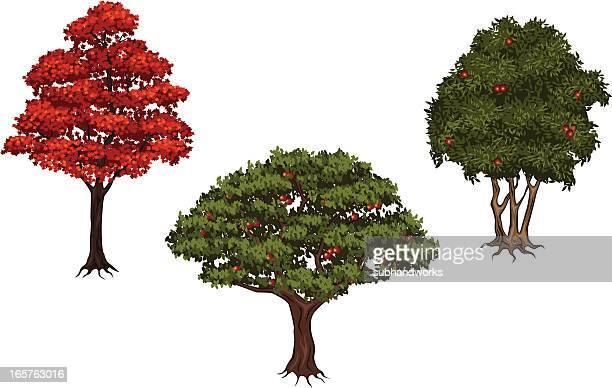 ilustraciones, imágenes clip art, dibujos animados e iconos de stock de conjunto de árbol - manzano