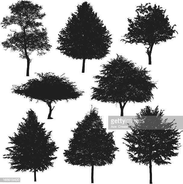 ilustrações, clipart, desenhos animados e ícones de coleção de silhueta de árvore 3 - pilritreiro