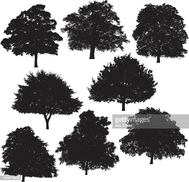 tree silhouette collection 4 - ash stock illustrations, clip art, cartoons, & icons