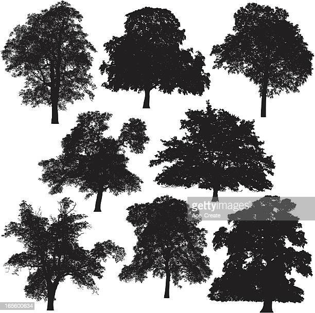 tree silhouette collection - ash stock illustrations, clip art, cartoons, & icons
