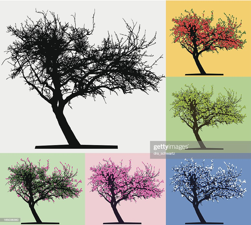Silueta de árbol, Four seasons : Ilustración de stock