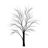 Tree silhouette isolated on white background
